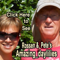 Click Here to View Current Auctions of Amazing_daylilies!