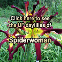Click Here to View Current Auctions of Spiderwoman!